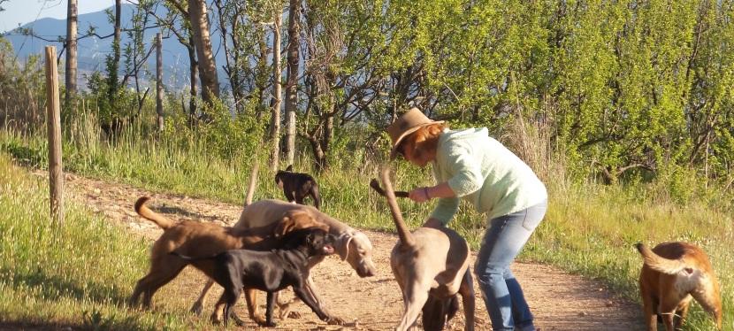 Stellenbosch: Winery Dogs